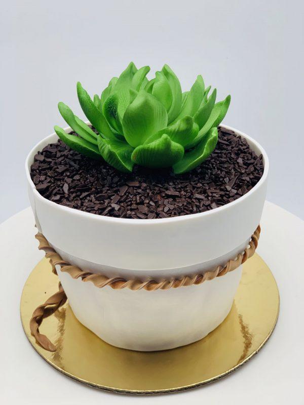 """Jubiliejinis tortas """"Vazonėlis su sukulentu"""""""